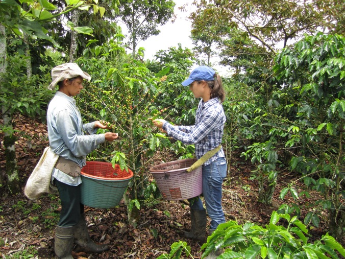 My first time picking coffee. Turrialba, Costa Rica with Sonia on her family's farm.