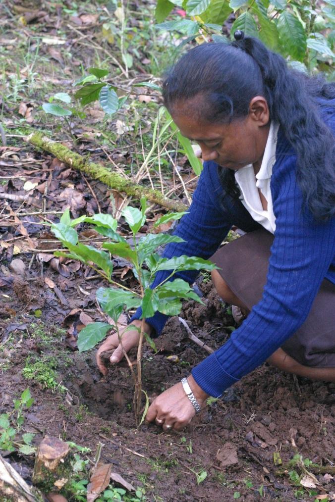 Maria transplanting a seedling