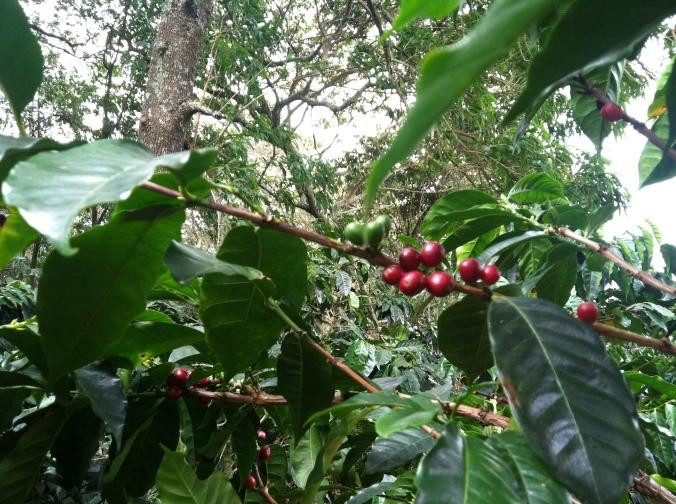 Inside Noble's coffee island