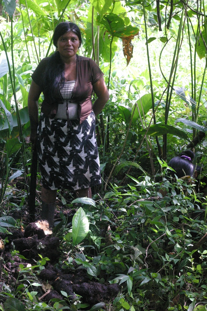 Ngöbe women digging up ñampi from their mangrove finca. Note the tool.