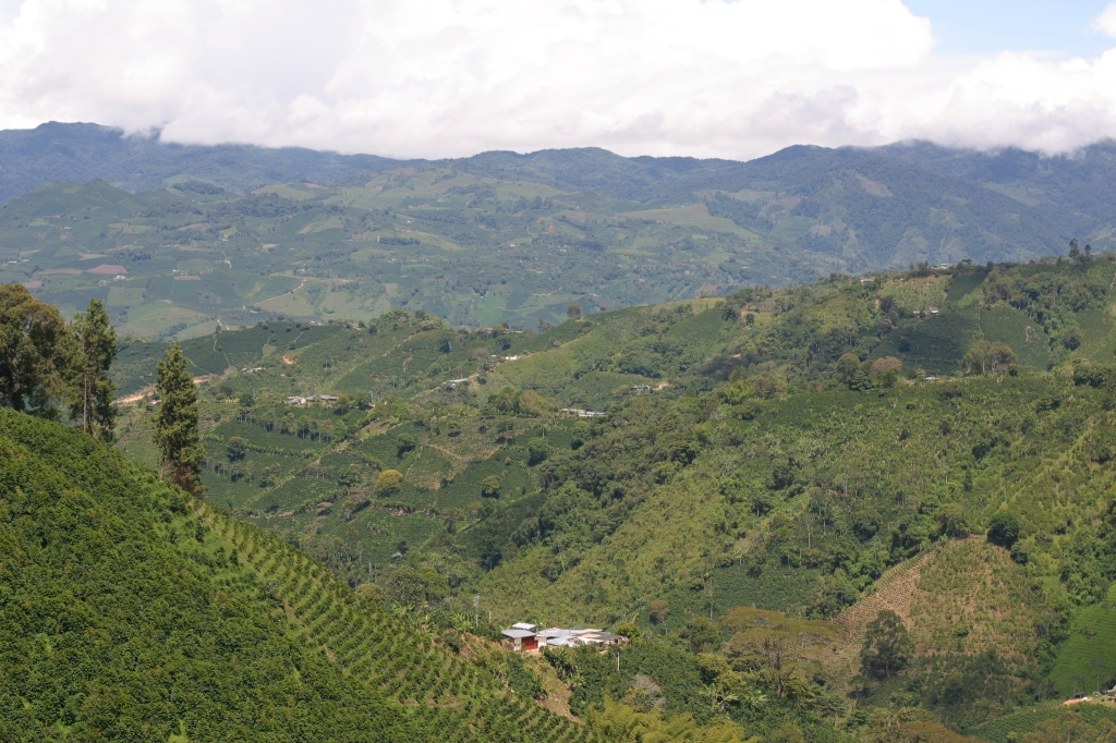 Coffee cultural landscape in Huila, making it officially not World Heritage, but pretty awesome anyway