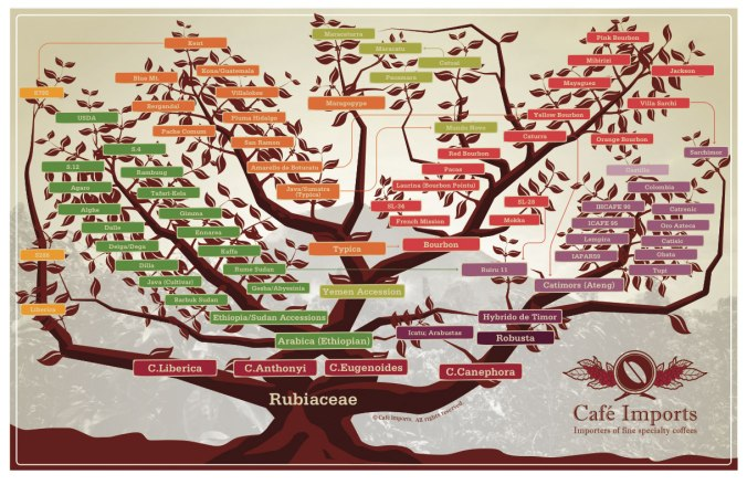 Coffee varietal tree by Cafe Imports.