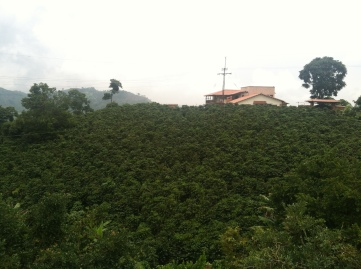 Finca La Meseta, Chinchina, Colombia