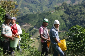 Picking in San Isidro, Acevedo, outside of Pitalito in Huila