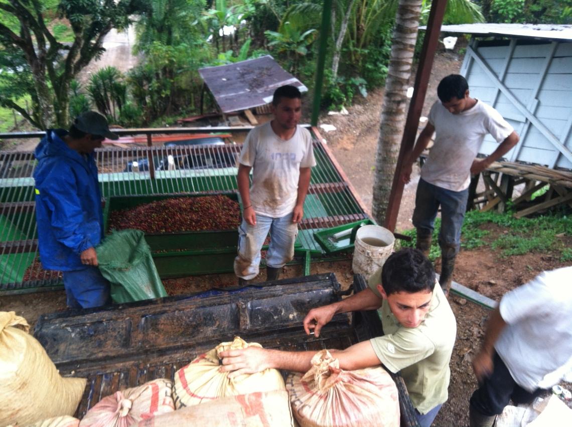Pital de San Luis communal receiver heading for communal Costa Rican mill