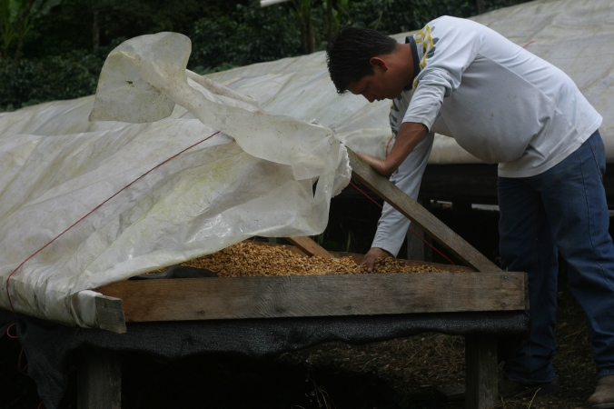 Jose Raul manages a Panamanian coffee finca and makes many decisions while the owners are on the other side of the world.