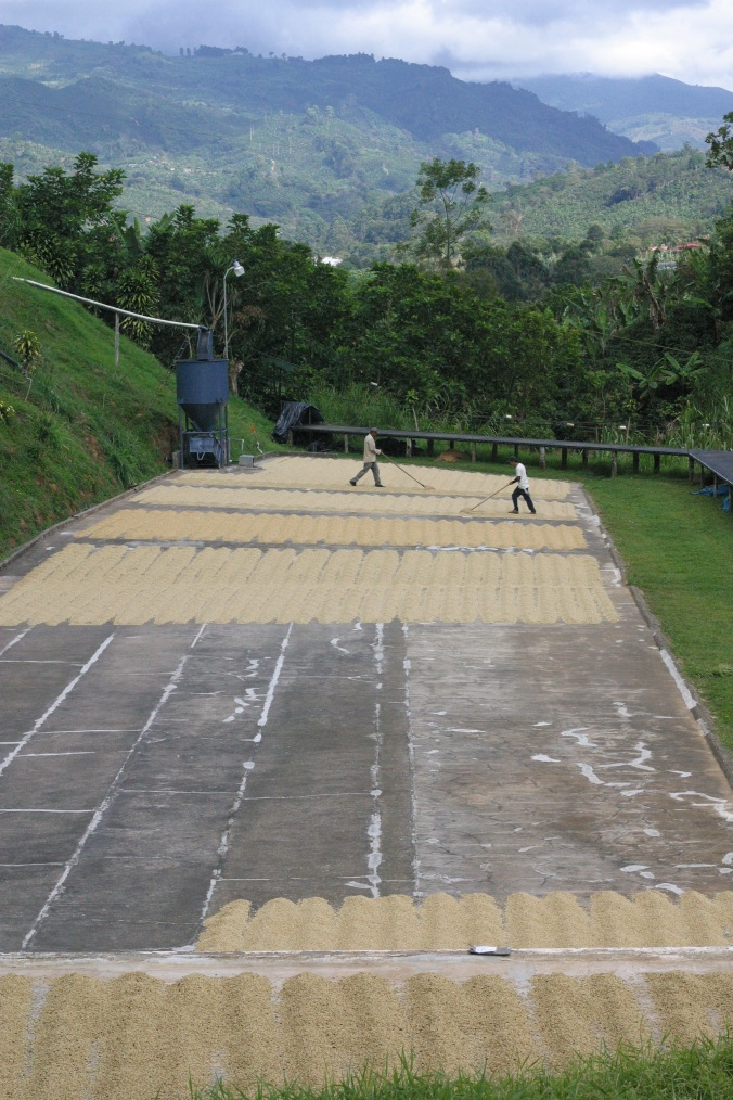 Raking at La Candelilla in San Marcos, Costa Rica