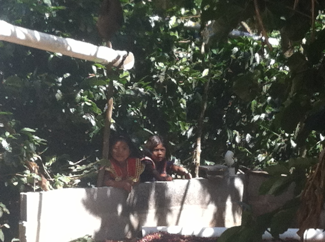 Ngobe girls playing in the cafetal (and spying on visiting gringos)