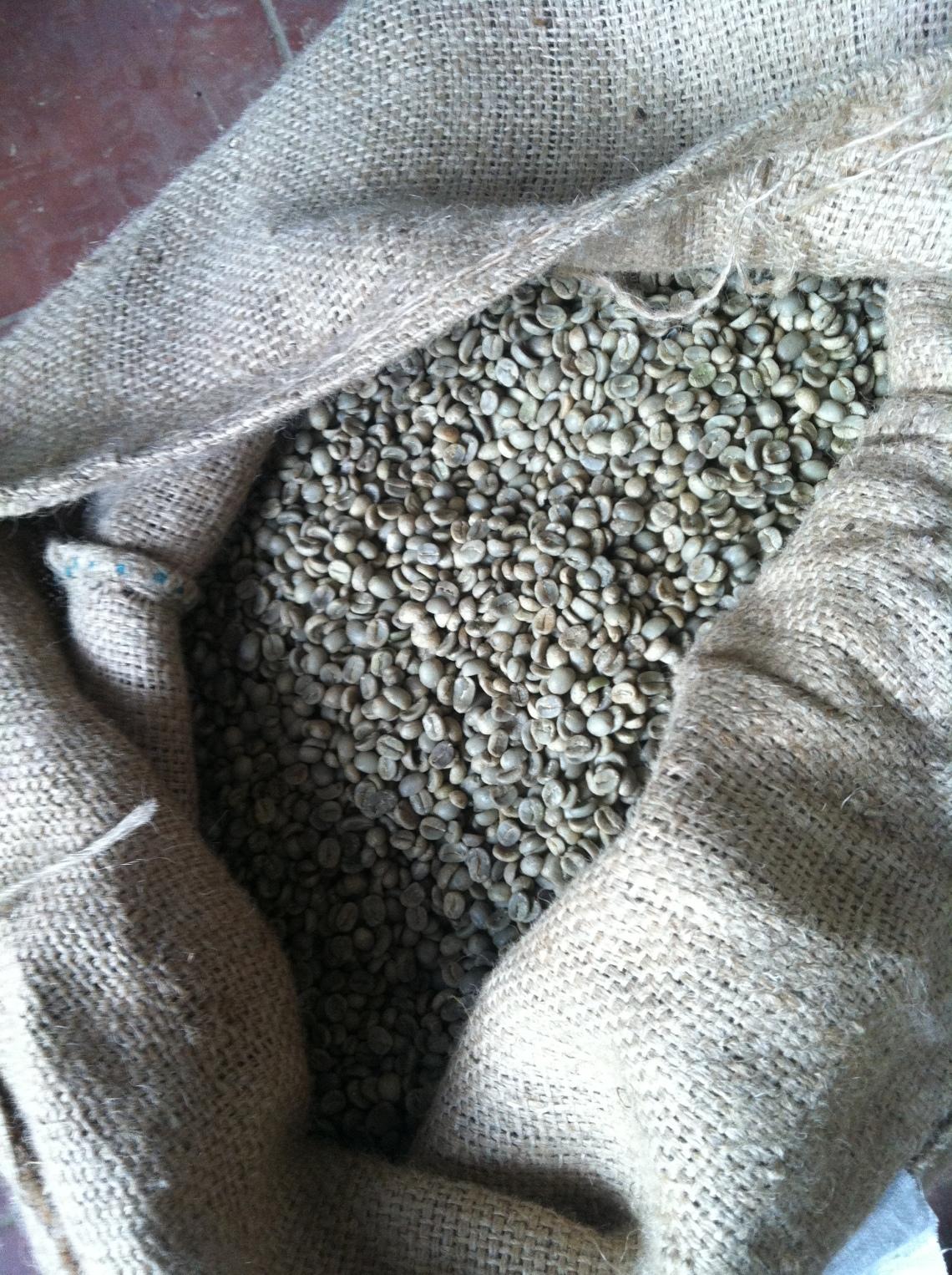 Green Santa Anita coffee