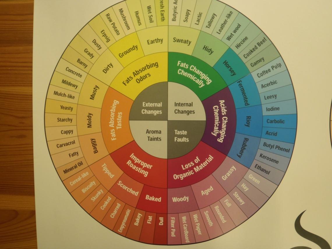 SCAA Flavor Wheel